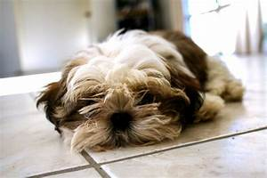 why do dogs lick floor tiles cuteness With why do dogs lick the floor