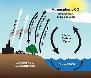 Carbon  U2013 How Valuable Is It For Your Soil