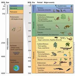 Is the geologic time scale useful? - Quora