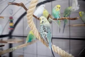 Vogelkäfig Selber Bauen : wellensittich spielzeug ideen wellensittich spielzeug ~ Lizthompson.info Haus und Dekorationen