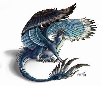 Deviantart Dragon Sunima Creatures Fantasy Feathered Dragons
