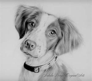 Pencil Drawings: Pencil Drawings Animals Pinterest