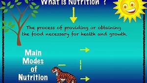 Nutrition And Modes Of Nutrition  Ppt