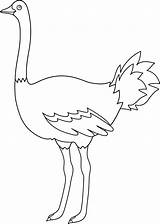 Ostrich Coloring Clip Emu Template Outline Colorable Bird Pages Line Birds Sweetclipart Egg Sketch Parrot Templates sketch template
