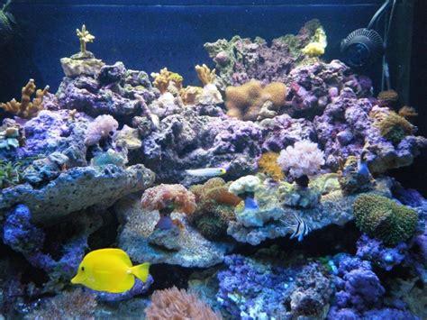forum aquarium recifal nord