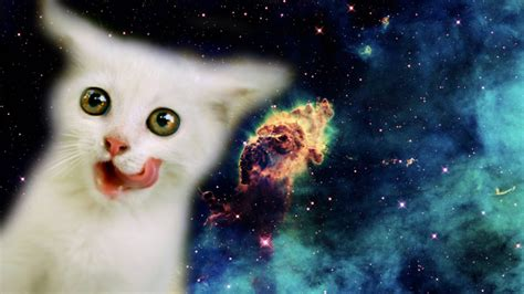 Space, Stars, Cat Wallpapers Hd  Desktop And Mobile