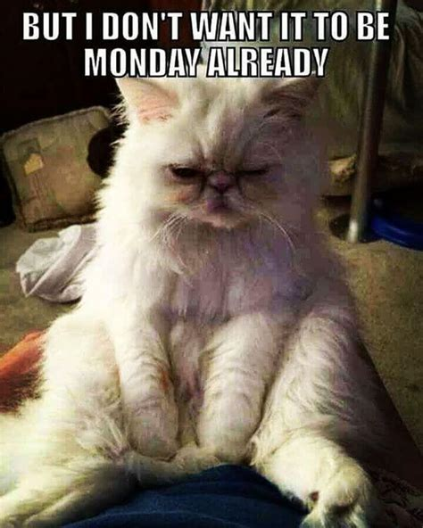 Monday Memes 59 Monday Meme Pictures To Try And Make Your Weekend Longer