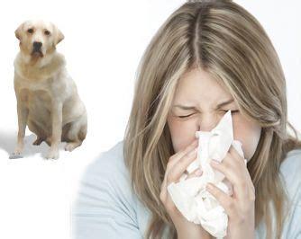 hypoallergenic dog breed ideas  pinterest