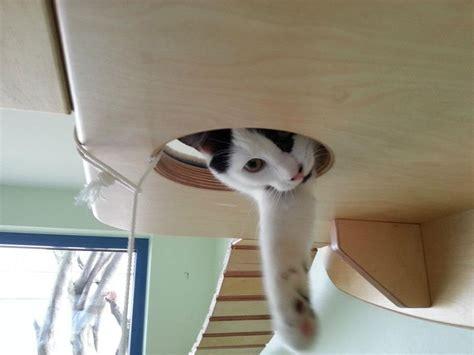 jeux pour chat maison transformer une pi 232 ce en aire de jeux pour chat 2tout2rien