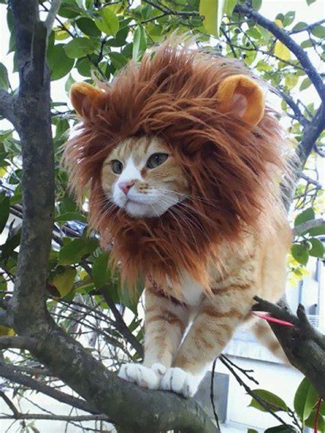 cutest  terrifying cat costumes