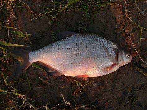 Tests: Vai pazīsti Latvijas zivis? - Spoki