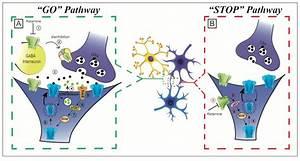 Mechanism of action of ketamine's rapid antidepressant ...