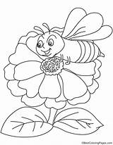 Zinnia Coloring Flower Bee Attracts Getcolorings Printable sketch template