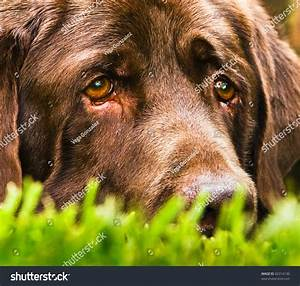 Very Sad Dog Looks Like He Stock Photo 82314130 - Shutterstock