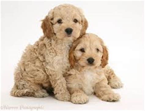 10 unusual crossbreed dogs that prove mutts are super cute