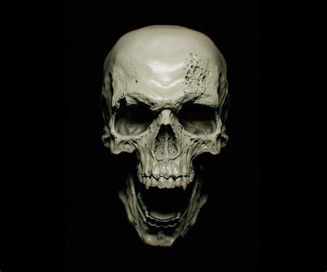 Animal Skull Wallpaper - fondos de pantalla cara monocromo fondo negro oscuro