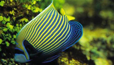 heater   freshwater fish tank animals