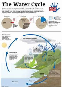 Infographic  The Water Cycle