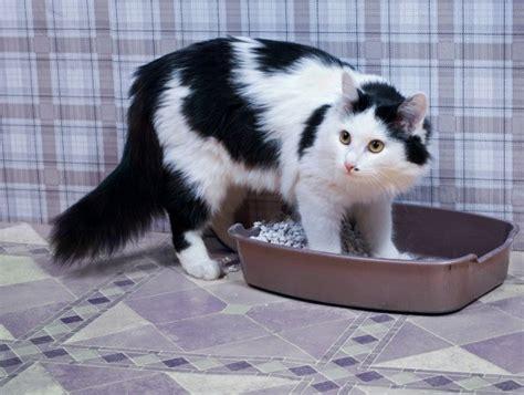 cat stopped using litter box cat not using the litter box thriftyfun