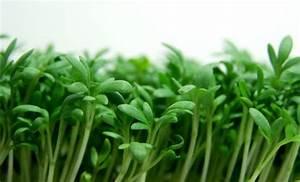Salat Selber Anbauen : fr hbeet anlegen und selber machen nachhaltig salat und gem se anbauen ~ Markanthonyermac.com Haus und Dekorationen