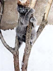 Funny Cat Tree