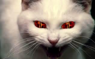 evil cats evil cat whisperings