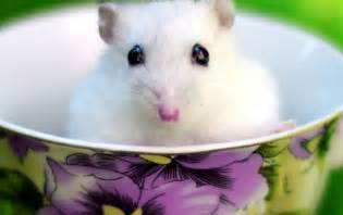 Cute White Mouse