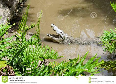 Big Open Mouth Alligator