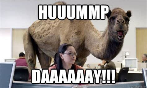 Hump Day Camel Meme - 301 moved permanently