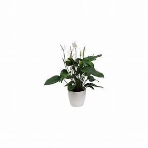 Cache Pot Plante : anthurium 39 polaris 39 cache pot blanc plantes et jardins ~ Teatrodelosmanantiales.com Idées de Décoration