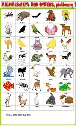 animals  pets pictionary  animals pinterest