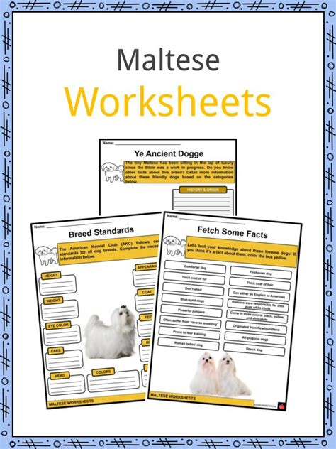 maltese facts worksheets history physical attributes