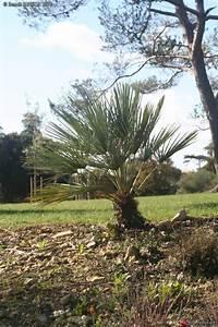 Jardin Des Plantes La Rochelle : le forum des fous de palmiers parc franck delmas la rochelle ~ Melissatoandfro.com Idées de Décoration