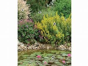 Plantes Vivaces Autour D Un Bassin : massif de vivaces autour du bassin ~ Melissatoandfro.com Idées de Décoration