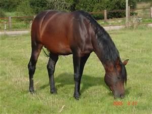 cheval bai brun blog de robe cheval 60 With robe bai