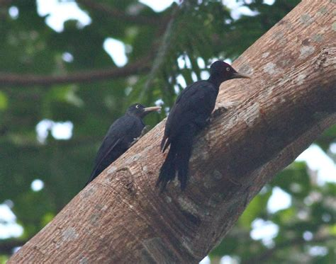 a birder in the philippines subic 27th to 29th oct