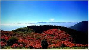 Highlights And How To Get To Katsuragi Kogen   Uff5c Japan U0026 39 S