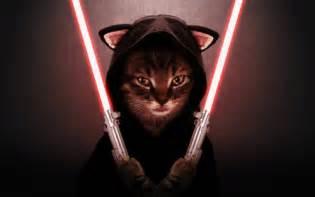 cat war catssportsboom