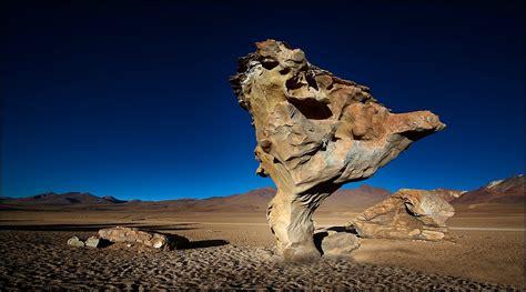 arbol de piedra forum fuer naturfotografen