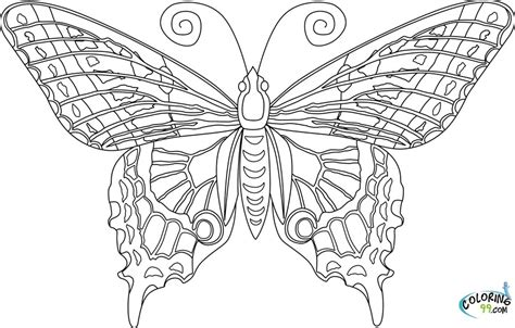 detailed butterfly coloring pages for adults exles