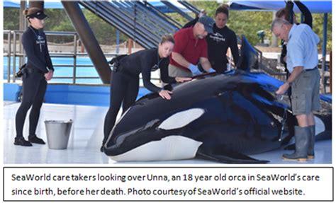 Seaworld To End Killer Whale Captivity