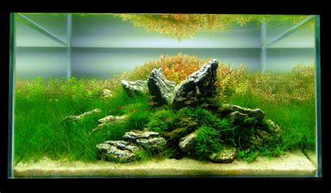 Aquascaping World by Aquascaping World Competition Gallery Jurassic Jungle