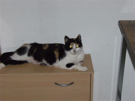 si鑒e auto 2 ans et demi chaton chats a adopter