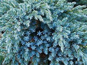 Great Conifers for Fall Containers