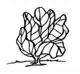 Lettuce Coloring Pages Vegetables Coloringcrew Recommended sketch template