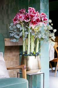 Amaryllis In Der Vase : amaryllis blumenb ro holland newsroom ~ Lizthompson.info Haus und Dekorationen