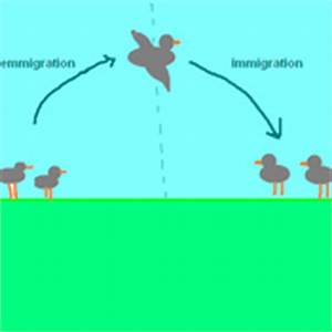 Immigration and Emigration Tutorials, Quizzes, and Help ...