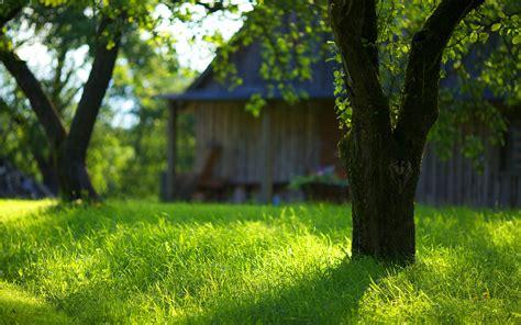 garden green grass images hd desktop wallpapers  hd
