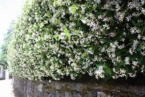 Winterharte Pflanzen Für Balkonkästen : kletterpflanzen f r den garten wohn design ~ Orissabook.com Haus und Dekorationen