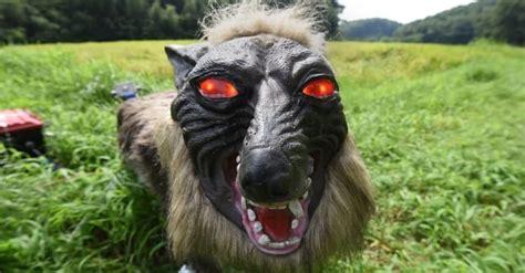 japanese farmers   terrifying robot wolves